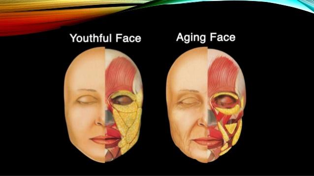 ogee-facial-curve
